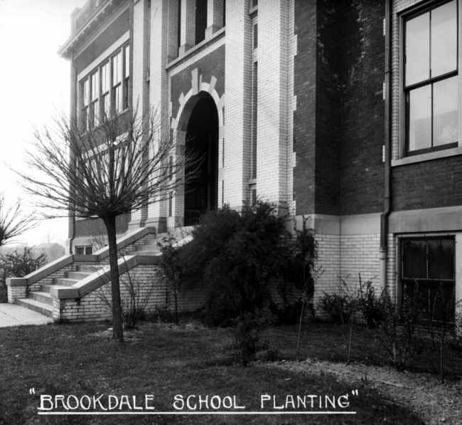 Brookdale School Planting